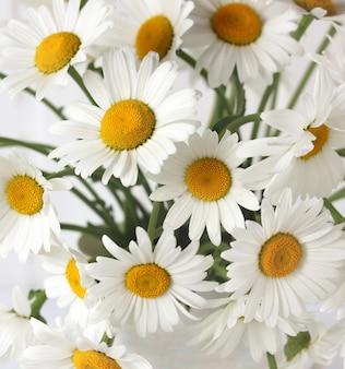 Kamille. strauß gänseblümchen, draufsicht. gartenblumen.
