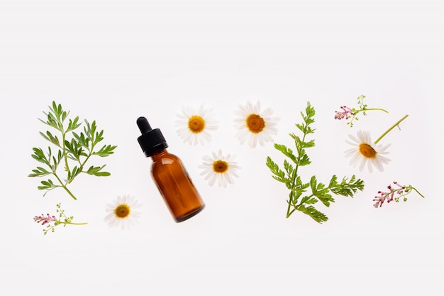 Kamillenblüten und kosmetische flasche des ätherischen öls auf weißem hintergrund, draufsichtkonzept der naturkosmetik oder der alternativen medizin