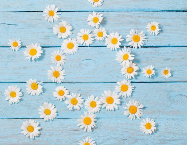 Kamillenblume über blauem hölzernem hintergrund