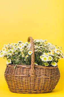 Kamillenblumen im korb auf gelbem hintergrund