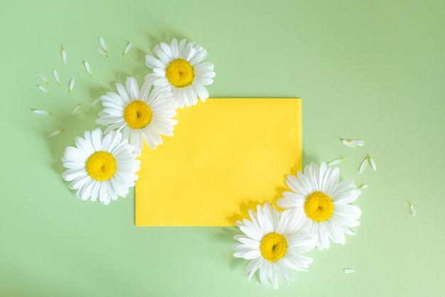 Kamillenblumen im umschlag auf buntem hintergrund