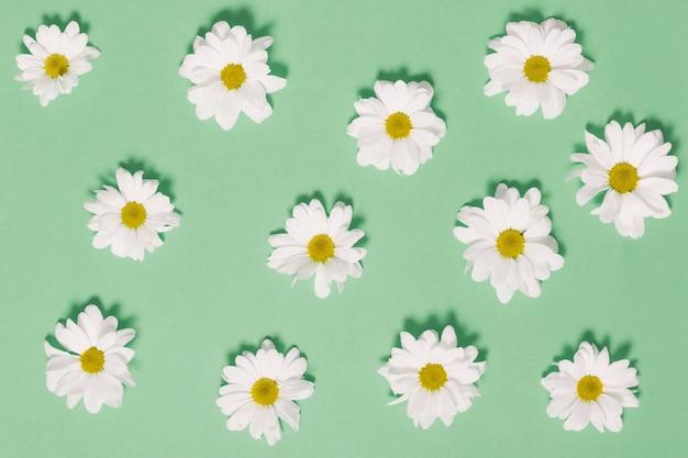 Kamillenköpfe auf grünem hintergrund