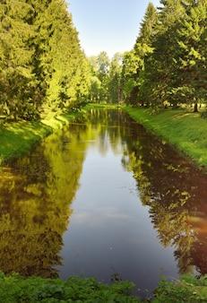 Kanal im sommerpark. grüne ufer des stausees bedeckt mit hohen weihnachtsbäumen