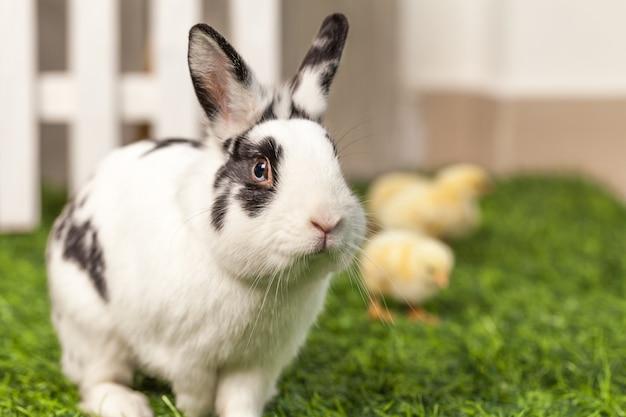 Kaninchen, das mit hühnern im garten spielt.
