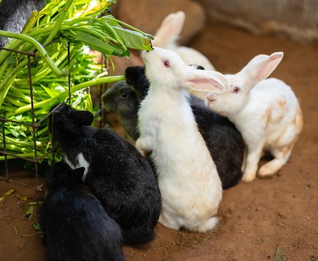 Kaninchen frisst die winde