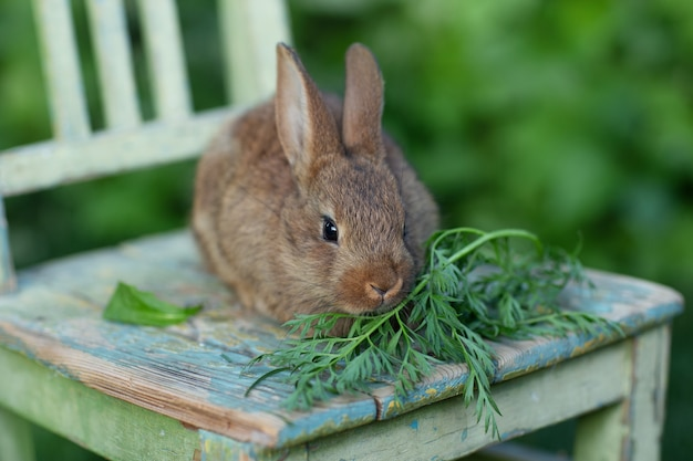 Kaninchen frisst gras