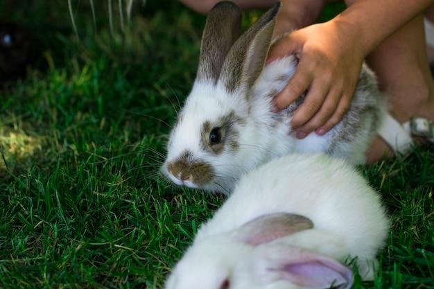 Kaninchen im grünen gras mit kleinem kind und kaninchen im hintergrund unscharf.