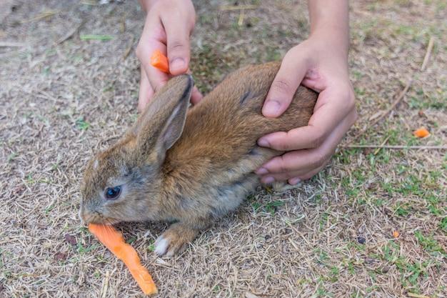 Kaninchen im zoo