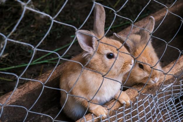 Kaninchen in einem käfig auf einem bauernhof
