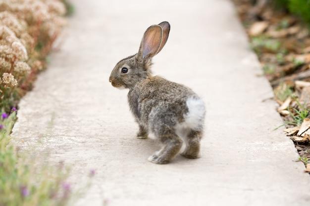 Kaninchen ist schönes tier der natur