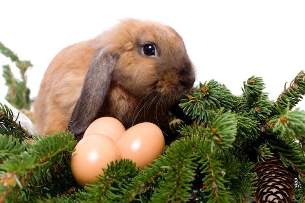 Kaninchen mit hängeohren, das in den niederlassungen des tannenbaums nahe drei eiern sitzt