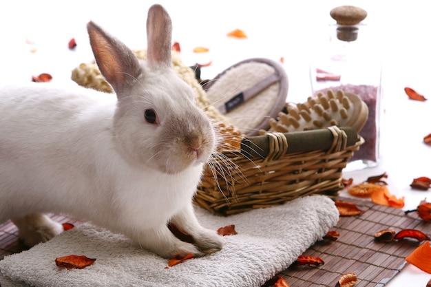 Kaninchen mit spa-produkten auf weiß