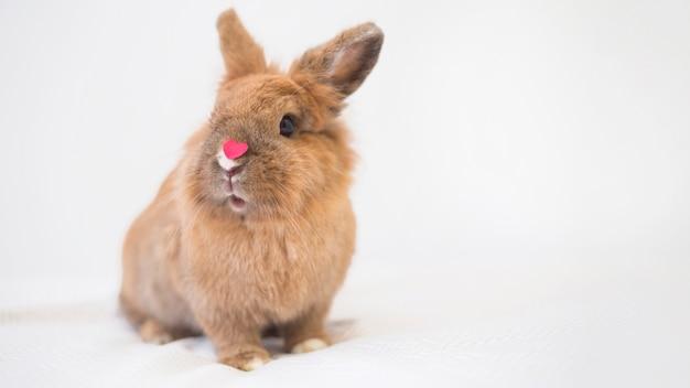 Kaninchen mit wenig dekorativem rotem herzen auf der nase