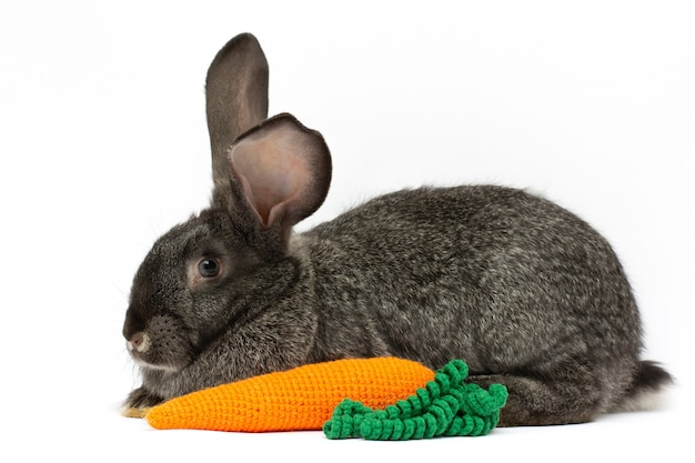 Kaninchen posiert mit einer gestrickten karotte auf weißem hintergrund