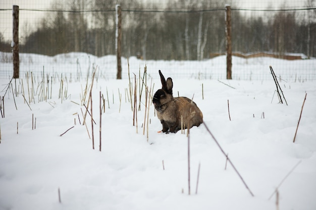 Kaninchen sitzt im schnee