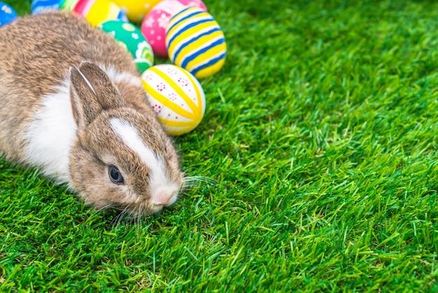 Kaninchen und ostereier im grünen gras
