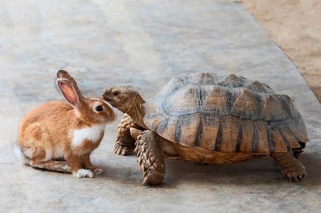 Kaninchen und schildkröte diskutieren den wettbewerb.