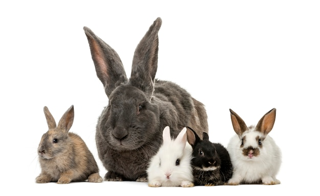 Kaninchen vor einer weißen oberfläche
