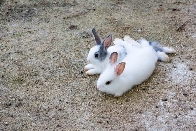 Kaninchenhäschen im garten