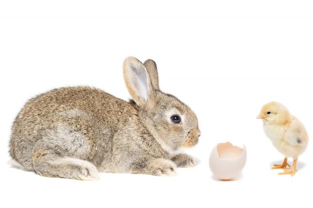 Kaninchenhühnereiweißhintergrund