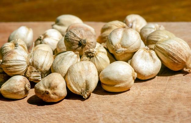 Kapulaga jawa oder javanischer kardamom (amomum compactum), eine kardamomart, die als gewürz für gerichte, kräuter und medizin verwendet wird, im flachen fokus