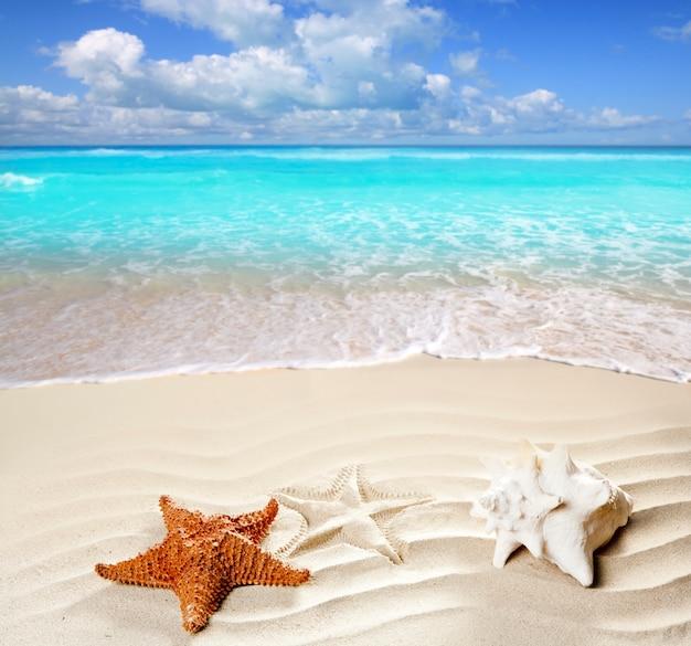 Karibik tropischen strand weißen sand seestern muschel