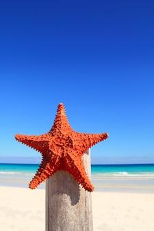 Karibische starfish auf hölzernem pfostenstrand