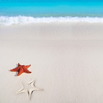 Karibischer seestern tropischer sand-türkisstrand