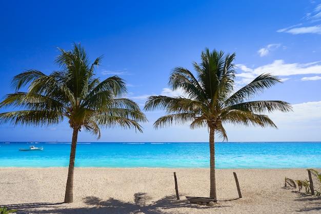 Karibischer strand kokosnusspalmen riviera maya