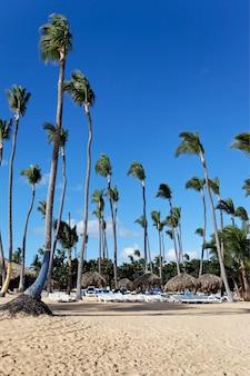 Karibischer strand mit palmen und blauem himmel