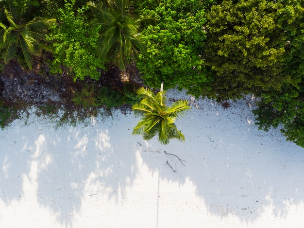 Karibisches meer des tropischen strandpalmenwedels bei pasir panjang. indonesien molukken-archipel, kei islands, exotisches reiseziel.