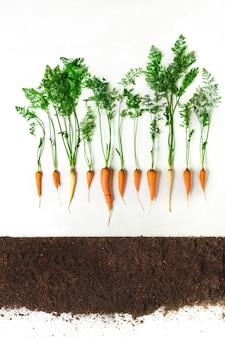Karotte oberirdisch, querschnitt, ausgeschnittene collage. gesunde gemüsepflanze mit blättern isoliert. landwirtschafts-, botanik- und landwirtschaftskonzept