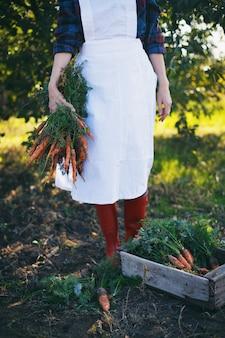 Karotten ernten. mädchen pflückt karotten im garten