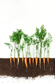 Karotten wachsen im boden, querschnitt, ausgeschnittene collage. gesunde gemüsepflanze mit blättern isoliert. landwirtschafts-, botanik- und landwirtschaftskonzept