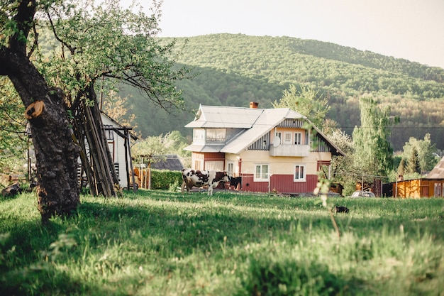 Karpaten-gebirgstal in der nähe des dorfes mit blick auf die häuser und das vieh