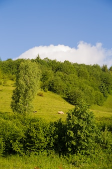 Karpaten natur im sommer