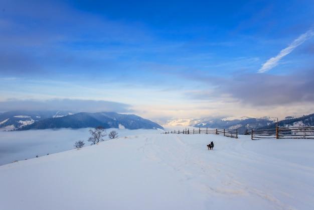 Karpaten winter berge