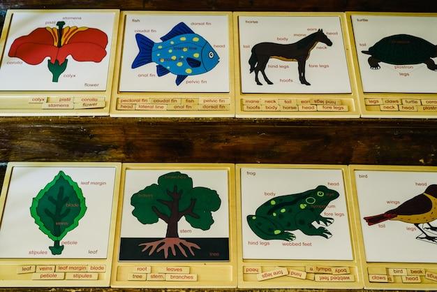 Karten mit namen von tieren in einer montessori-schule.