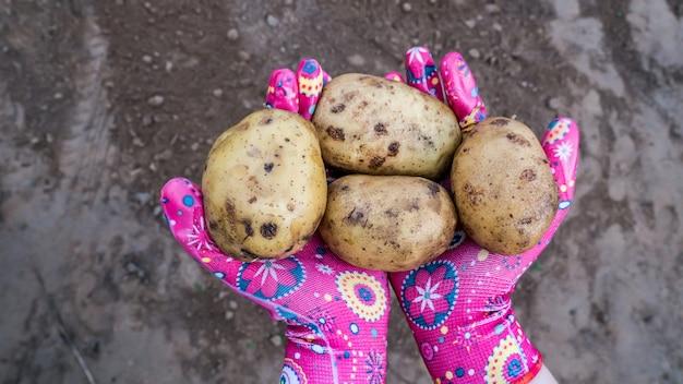 Kartoffeln in der hand