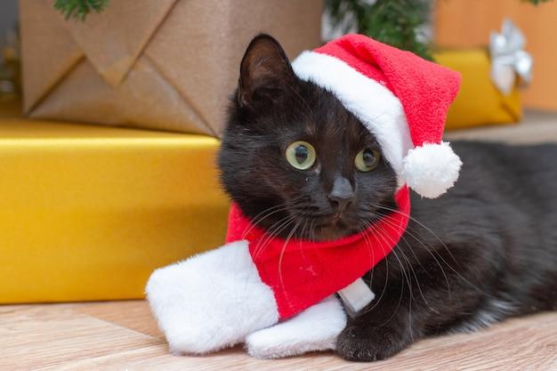 Katze als weihnachtsmann verkleidet. schwarze katze unter dem weihnachtsbaum in einem neujahrskostüm