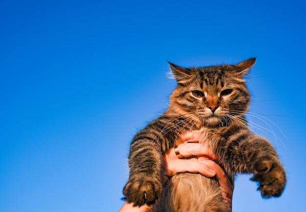 Katze am himmel. ein haustier. schönes kätzchen