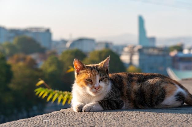 Katze an der grenze vor dem hintergrund der stadt tiflis, georgien.