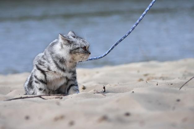 Katze an der leine.
