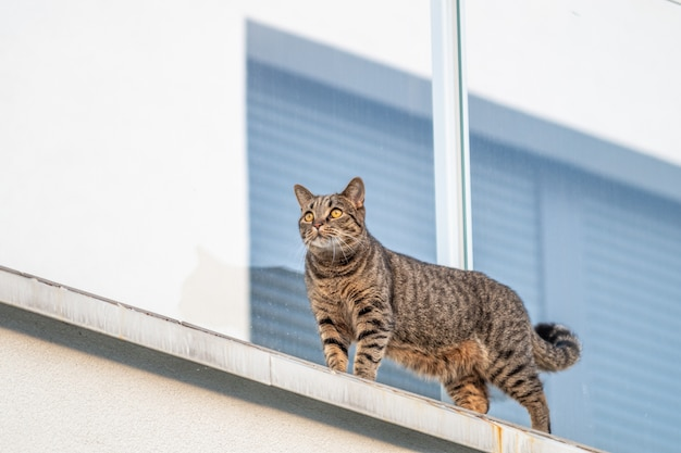 Katze an der weißen wand mit einem fenster an der oberfläche