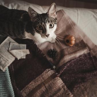 Katze auf dem bett, das kamera betrachtet