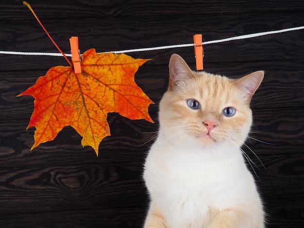 Katze auf dem hintergrund des herbstblattes
