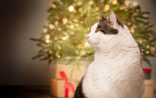 Katze auf dem hintergrund des weihnachtsbaums