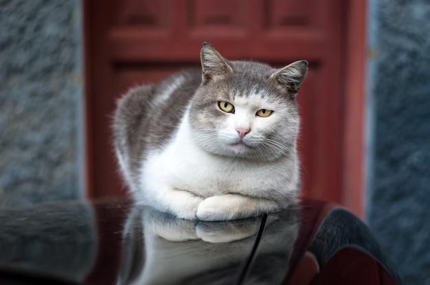 Katze auf dem motorhaubenauto entspannte sich
