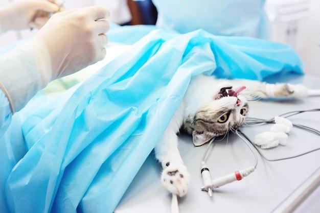 Katze auf dem operationstisch