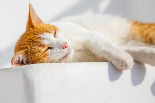 Katze auf den straßen von mykonos, griechenland